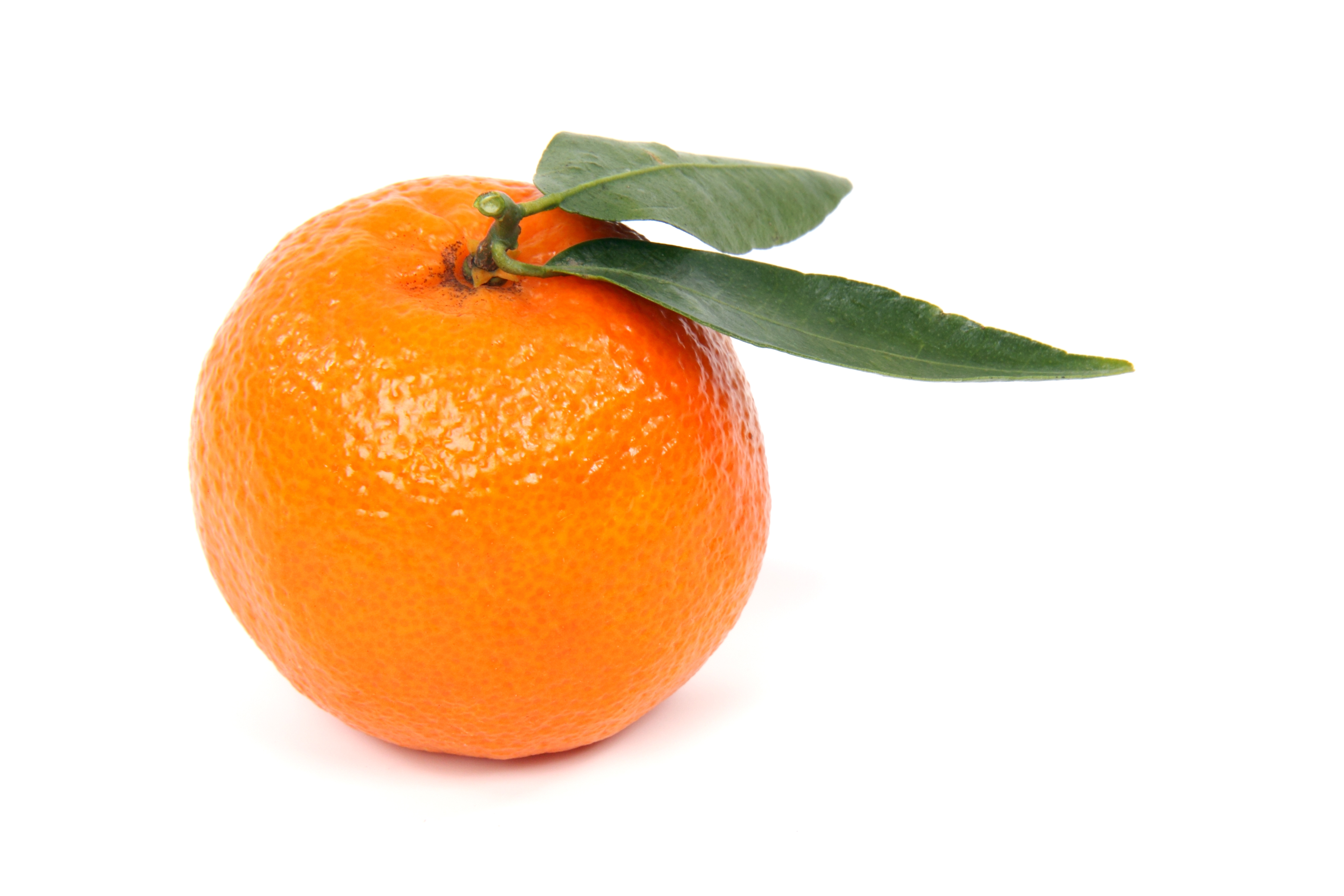 The Clementine - proud member of the mandarine orange family