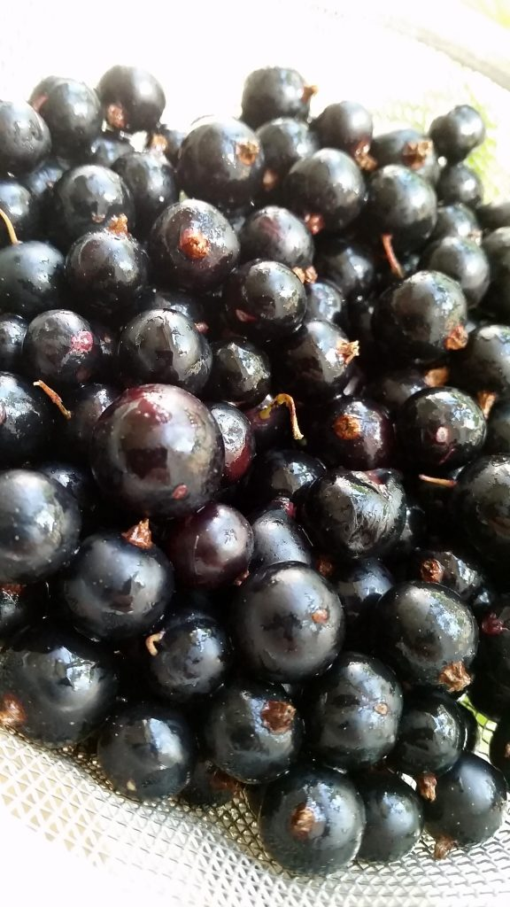 Blackcurrant - like many other berries, tasty, super healthy and loaded with goodness. Due to their high content of natural gelifier pectin, they work great in ice cream!